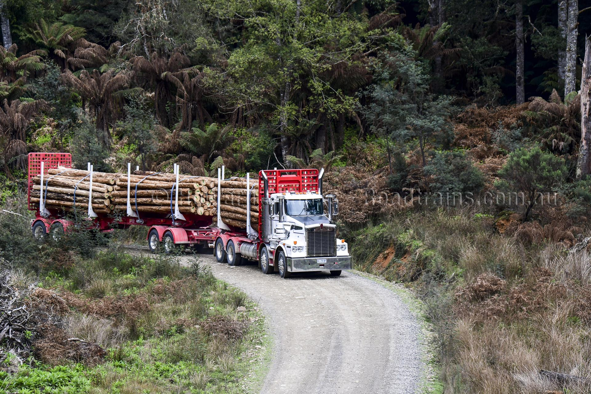 The Kennedy folding quad-dog fully loaded on the way out the bush